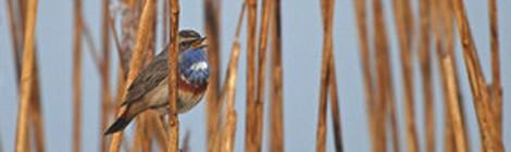 """Sortie Nature """"La Réserve ornithologique""""."""