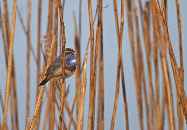 grand laviers Sortie Nature La reserve ornithologique