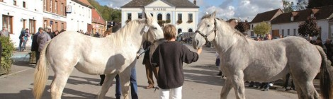 Concours et vente de chevaux boulonnais
