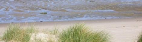 LES SORTIES NATURE : Les fruits de la dune