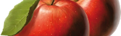 Fête de la pomme, du terroir et du picard