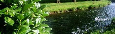 L'eau et la vie, l'eau est la vie !