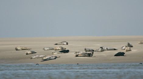 Découverte de la pointe du Hourdel et de la colonie de phoques.